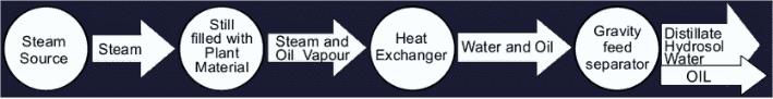 Essential Oils Distillation Process